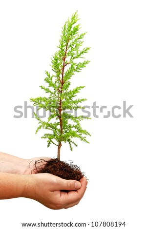 Seedling of tree in human hands isolated on the white background - stock photo