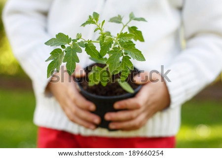 Seedling plant in the hands of a small child. Selective focus with extreme shallow depth of field. Focus on seedling. - stock photo