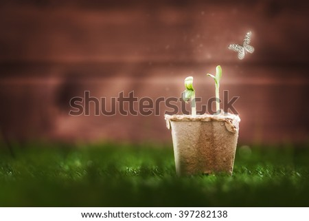 Seedling plants in the grass. Spring concept, nature and care. - stock photo