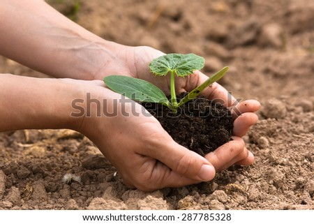 seedling with soil in women hands - stock photo