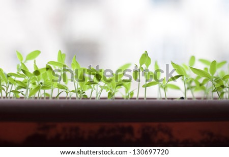 Seedlings - stock photo