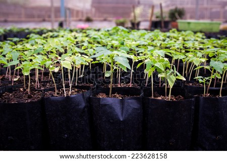 Seedlings are ready for planting For species to - stock photo