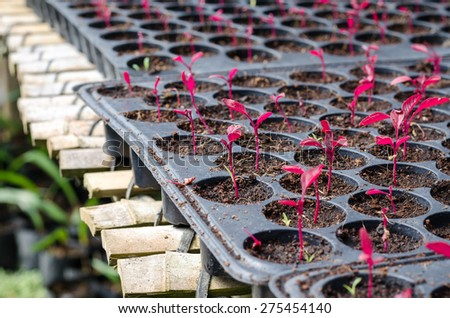 Seedlings beginning to grow in a propagator - selective focus