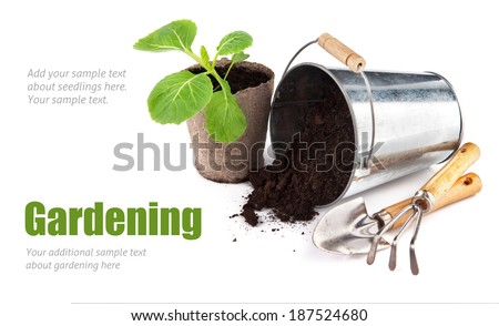 Seedlings cabbage with bucket soil and garden tools. Isolated on white background - stock photo