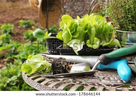 Seedlings, gardening - stock photo