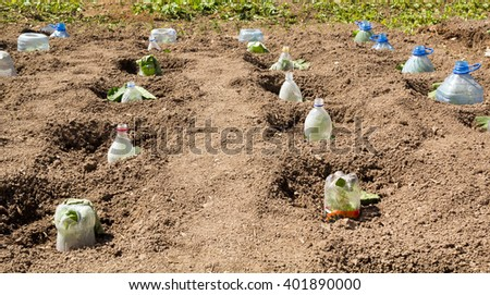 Seedlings growing in plastic bottles as small hotbeds - stock photo