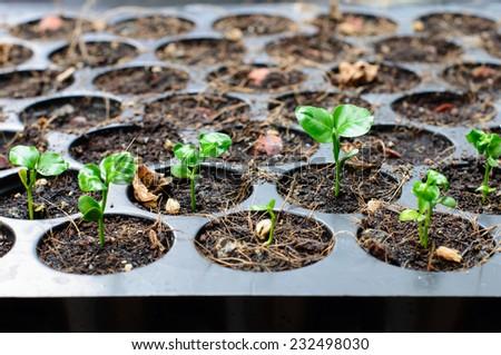 Seedlings grown in tray - stock photo