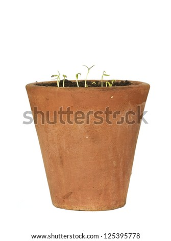seedlings in a rustic flower pot, isolated on white background - stock photo