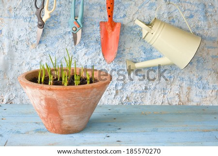 seedlings in flower pot with gardening tools - stock photo