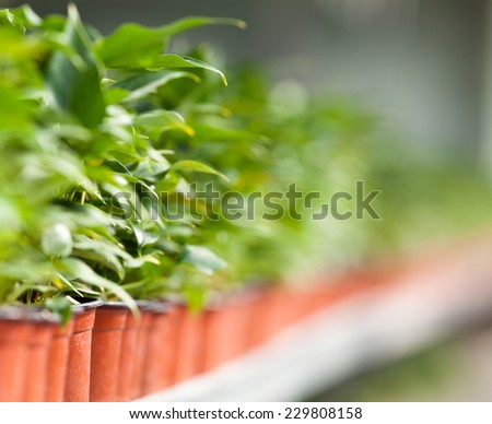 Seedlings in Greenhouse Indoors shot - stock photo