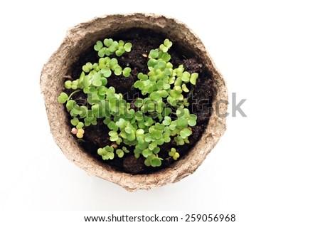 Seedlings in  pot - stock photo