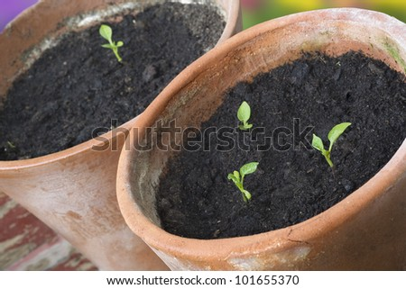 seedlings in rustic flower pots, selective focus - stock photo