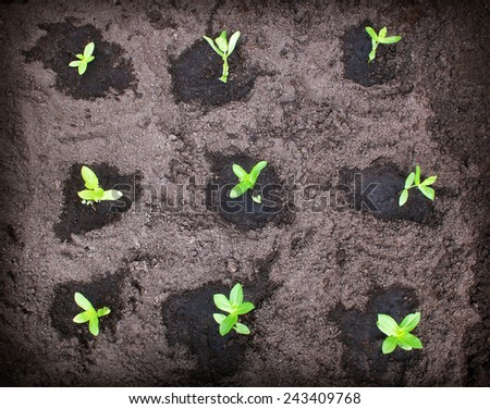 seedlings in the garden - stock photo