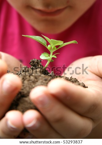 Seedlings in the hands of a girl image