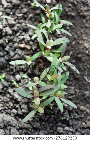Seedlings in the spring - stock photo