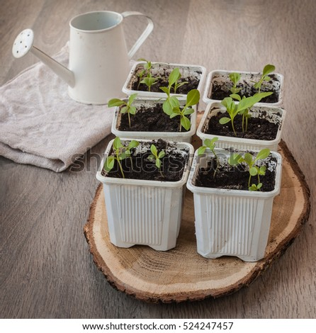 Seedlings of flowers in pots and watering can on a wooden table