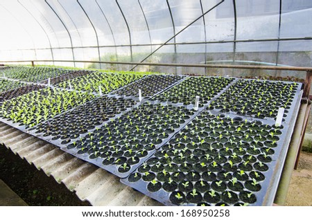 Seedlings on the vegetable tray - stock photo