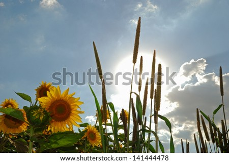 Seeds and sun - stock photo