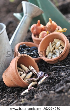 seeds in little pots placed on soil to sowing in vegetable garden  - stock photo