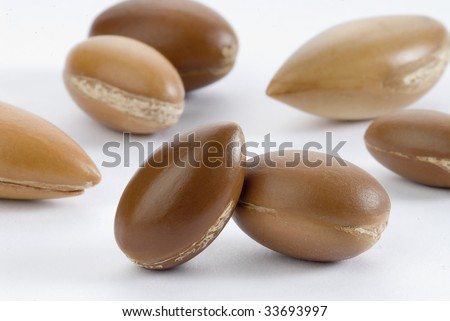 seeds of argan - stock photo
