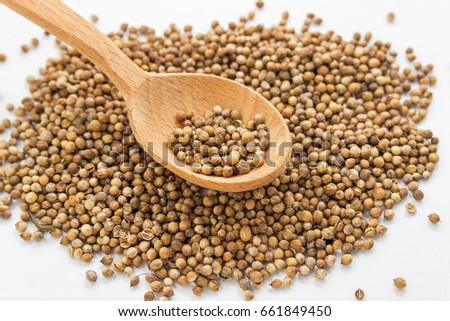 Seeds of coriander on a white background in a wooden spoon. Cilantro isolated. Coriandrum sativum. Common seeds.