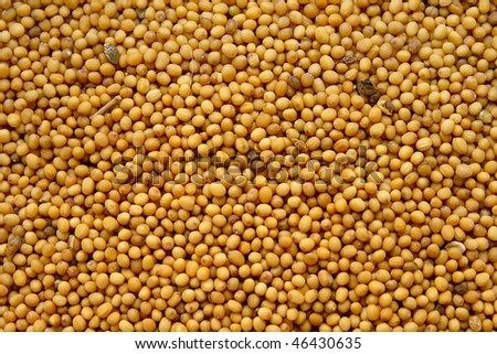 Seeds of mustard for culinary use