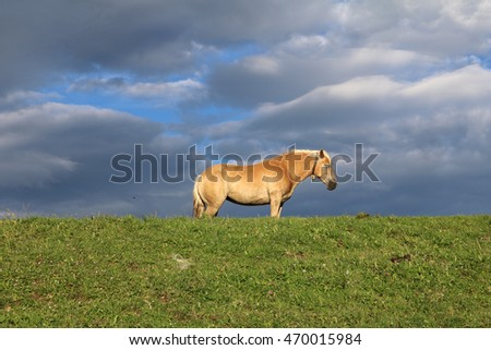 Seemingly golden horse on a grassy hill against a dramatic sky and with warm sunset light
