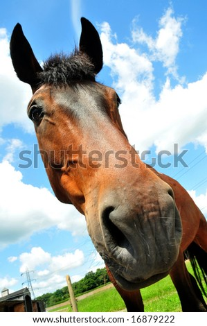 Seen from below distorted view of horses head emphasizing length of nose