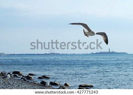 segulls on black sea