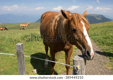 Seiser Alm meadow - Horse Italy.  Alpe di Siusi is the largest high altitude Alpine meadow in Europe - stock photo