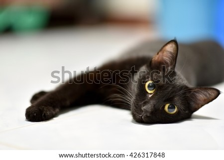 Select focus big yellow eyes of female Black cat. it show interest at photo camera, and Blur background - stock photo