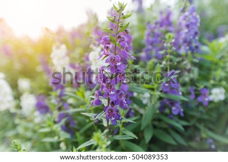 Select focus flowers bush violet purple stock photo 504089353 select focus flowers of bush violet and purple flowers abstract soft floral background mightylinksfo