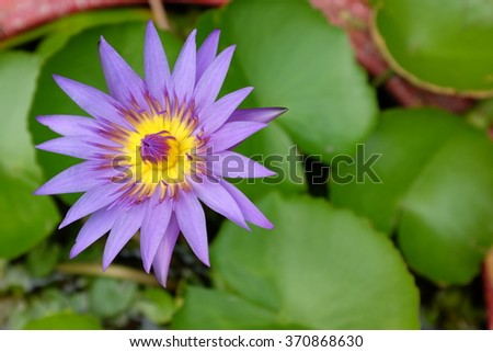 selected focus on the lotus. - stock photo