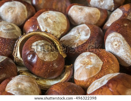 Selection of conkers with one in kernel