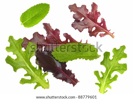 Selection of gourmet salad leaves isolated on a white background - stock photo
