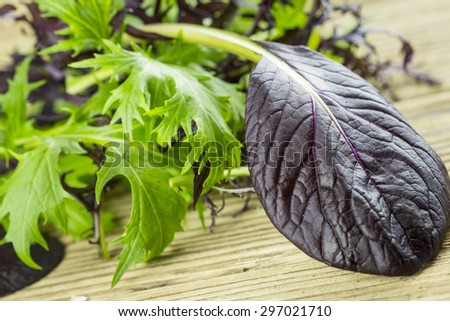 Selection of leafy green wild herbs and a colorful yellow Nasturtium flower with its pungent peppery taste for use as healthy salad ingredients piled on a wooden table - stock photo
