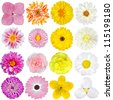 Selection of  Pink, Orange, Yellow and White Flowers Isolated on White Background. Red, Pink, Yellow, White Colours including rose, dahlia, marigold, zinnia, straw flower, sunflower, daisy, primrose - stock photo