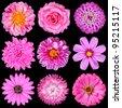 Selection of Pink White Flowers Isolated on Black. Nine Flowers - Daisy, Strawflower, Zinnia, Cosmea, Chrysanthemum, Iberis, Rose, Dahlia - stock photo