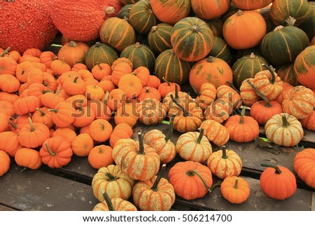 Selection of several pumpkins arranged on long wood table at market