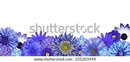 Selection of Various Blue Flowers at Bottom Row Isolated on White Background. Daisy, Chrystanthemum, Cornflower, Dahlia, Iberis, Primrose - stock photo