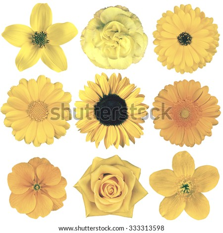Selection of Various Flowers in Yellow Vintage Retro Style Isolated on White Background. Daisy, Chrystanthemum, Cornflower, Dahlia, Iberis, Primrose, Gerbera, Rose.