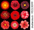 Selection of Various Red Flowers Isolated on Black Background. Set of Nine Dahlia, Gerber, Daisy, Carnation, Rose, Zinnia Flowers - stock photo