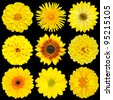 Selection of Yellow Flowers Isolated on Black Background. Various set of Dahlia, Dandelion, Daisy, Gerber, Sunflower, Marigold Flowers - stock photo