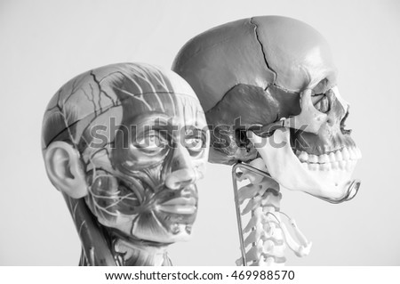 selective focus about human brain and human skull model with black and white color