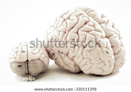 selective focus about human brain model with old color style - stock photo