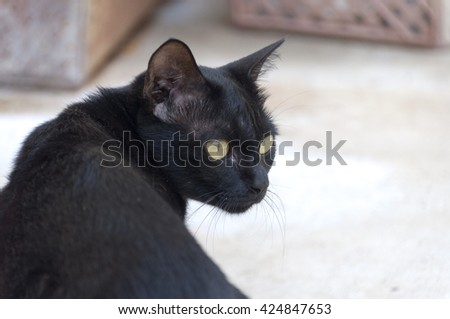 selective focus black cat