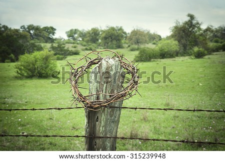 Selective focus crown of thorns on a Texas Hill Country fence post with a field and trees in the background - stock photo