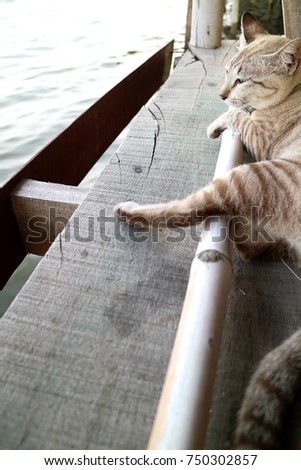 Selective focus cute cat sitting on the Wooden floor looking at to the river