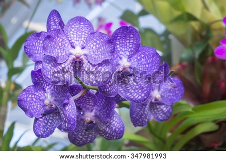 Selective focus of Beautiful white and purple orchid flower stem.