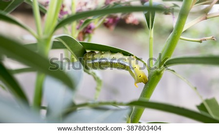 Selective focus of Green Caterpillar on green leaf - stock photo